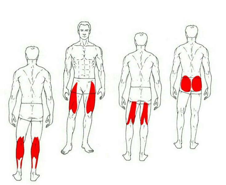 Tuesday: Legs